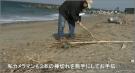 田原市政を考える会/第2回の伊良湖岬・海岸清掃