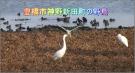 豊橋市神野新田の野鳥