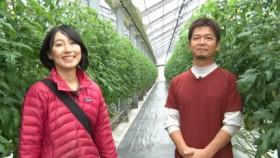 トマト生産ハウス